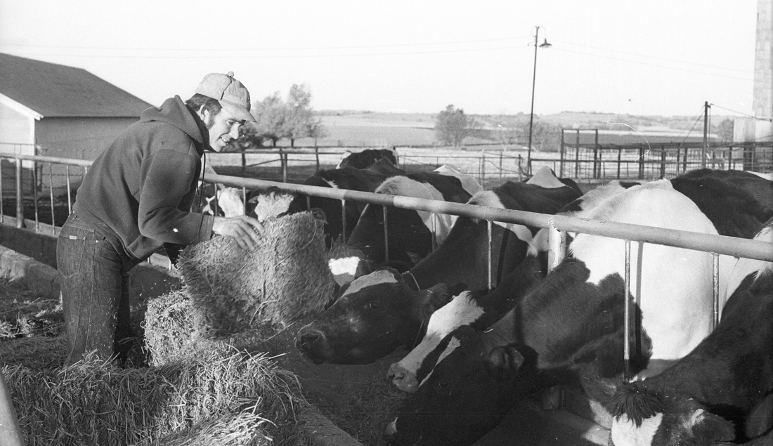 John Carlin and Dairy Cows in Smolan